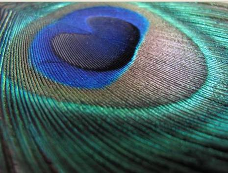 If we used teal, we might be able to incorporate peacock feathers into our flowers and centerpieces.