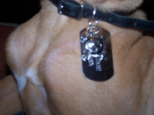 Marley's new tag and charm.