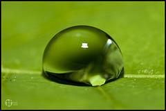 """Tomatoskin's photo """"Go Green!!!"""" on Flickr."""