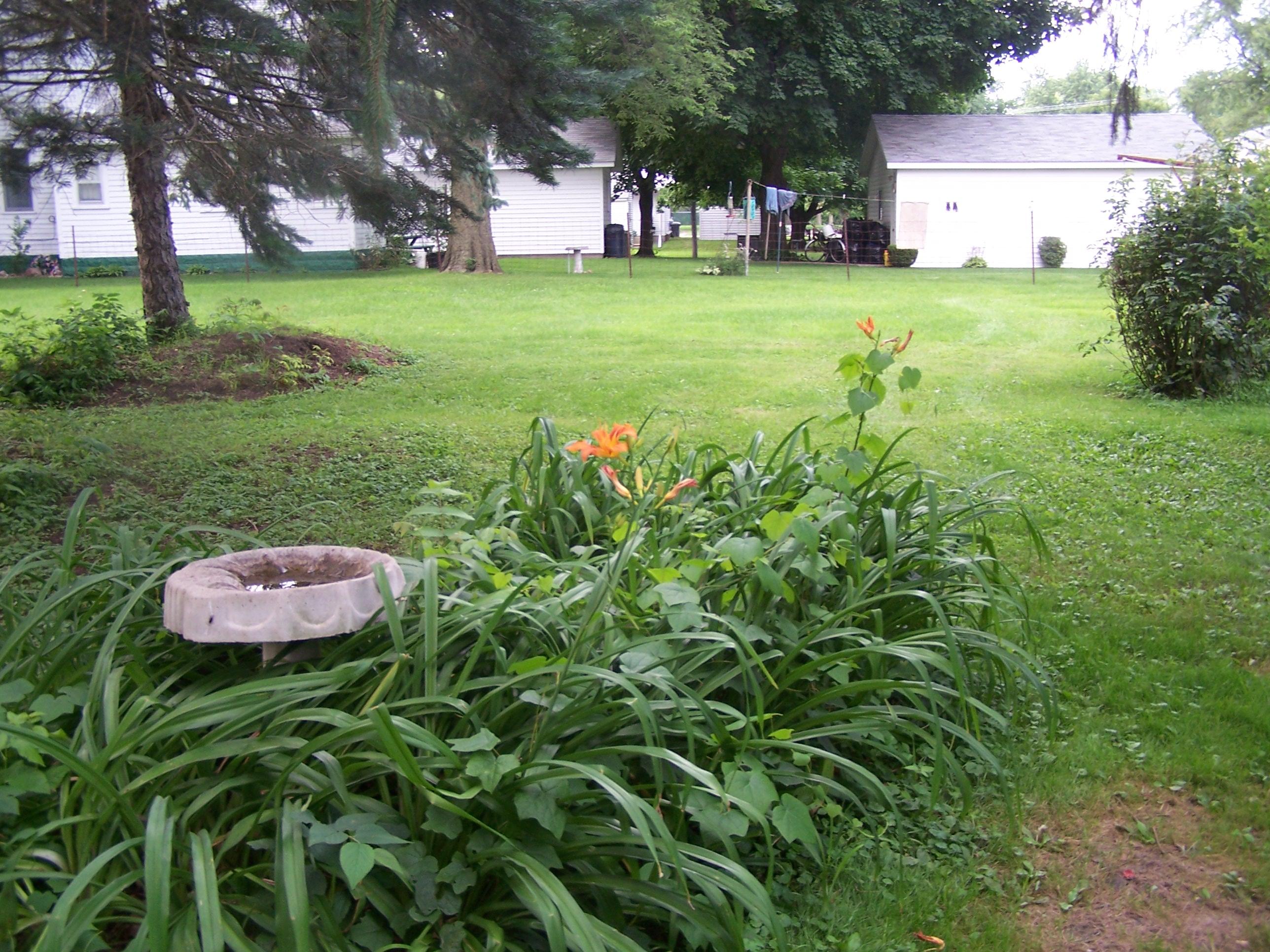 Flowers, Gilligan, Muddy Dogs 013