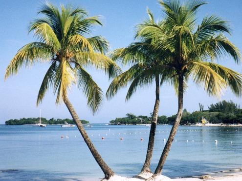 http://images.google.com/imgres?imgurl=http://mysite.verizon.net/eegad/negril_3_palms.jpg&imgrefurl=http://mysite.verizon.net/eegad/negril_3_palms.html&usg=__bJ24MhUCjiLvz6n8J9O_tXf9trk=&h=600&w=800&sz=193&hl=en&start=28&um=1&tbnid=5T45wT48h5NkUM:&tbnh=107&tbnw=143&prev=/images%3Fq%3Dnegril%2Bjamaica%2Bpictures%26ndsp%3D18%26hl%3Den%26sa%3DN%26start%3D18%26um%3D1